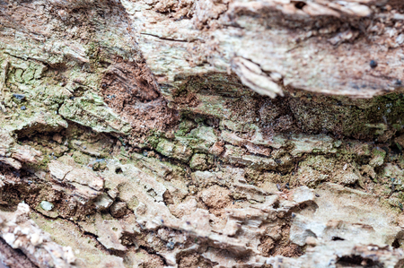 Macro detail of a piece of rotten wood photo