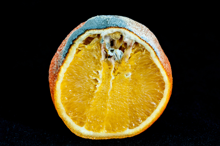 Detail of a rotten orange photo