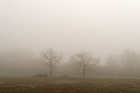 Winter landscape with morning fog 写真素材