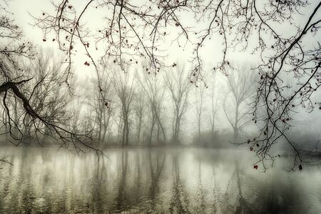 Reflections in a mysterious lake in winter with fog and several branches with few leaves