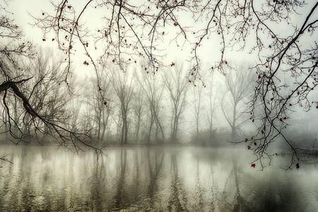 Spiegelungen in einem mysteriösen See im Winter mit Nebel und mehreren Ästen mit wenigen Blättern