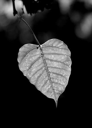 murk: leaf Stock Photo