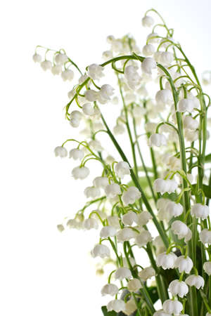mayflower: Lily of the valley isolated on a white backgroung.