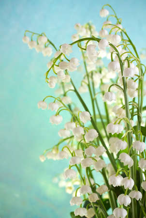Lily of the valley, isolated on a blue background. photo