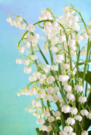 Lily of the Valley with rain drops on a blue background.