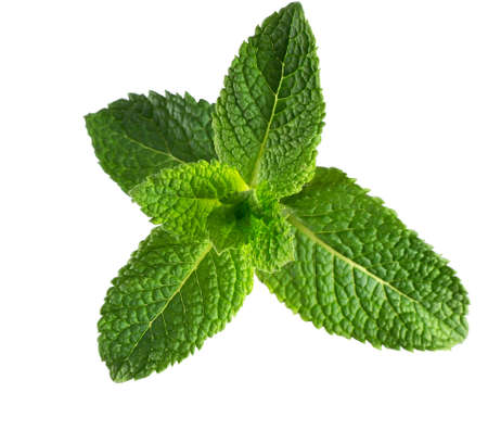 Mint isolated on the white background. Stockfoto