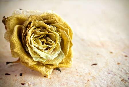 dode bladeren: Gedroogde roos op een oud papier achtergrond. Stockfoto