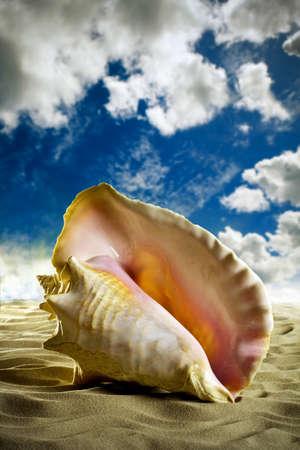 Large sea shell sea sand shore. photo