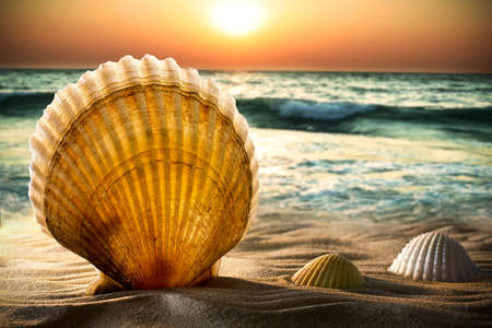 Sea shells in the sand, a sunset.