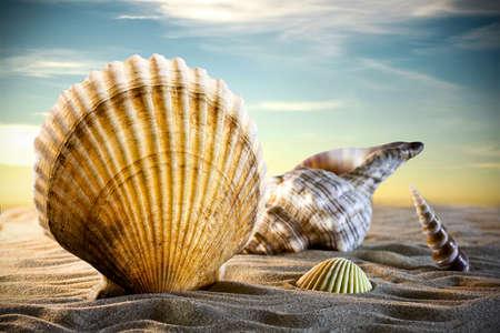 Coquillages dans le sable, un coucher de soleil.