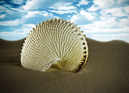 Crawled shell desert sand, studio picture. photo