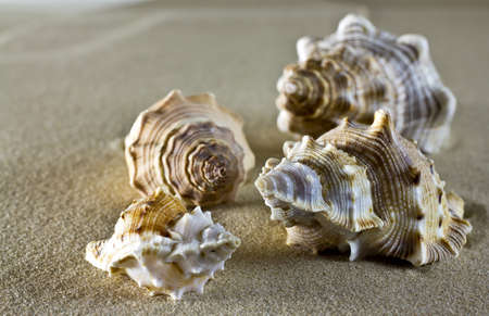 Sea shells on the sand. photo