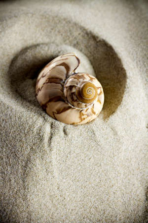One tiger shell in the sand. photo
