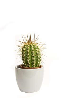 Pot fleur de cactus gris sur un fond blanc.