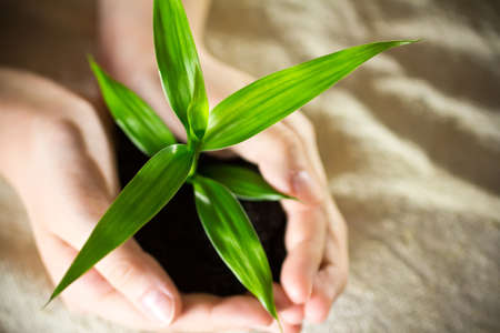 Kid hands holding sapling bamboo in soil Stock Photo