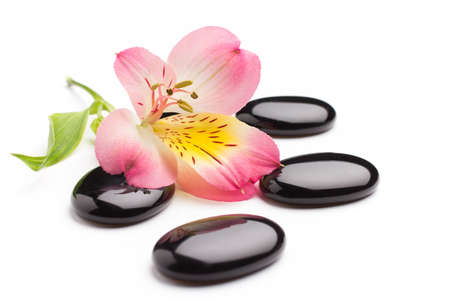 Spa stones and pink flower, isolated on white background. Stockfoto