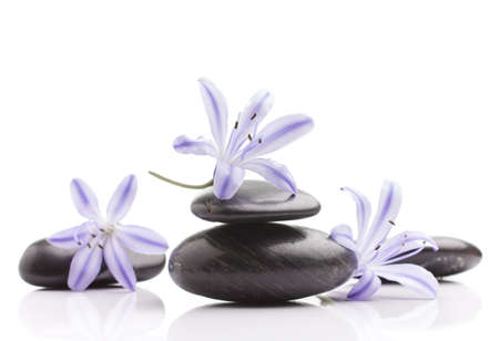 Spa stones and lilac flower, isolated on white background. Stock Photo - 17772477