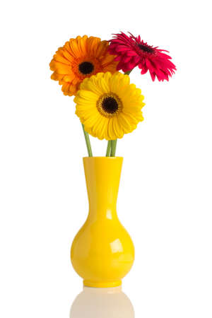 vase color: Flowers and vase isolated on te white backgroun.