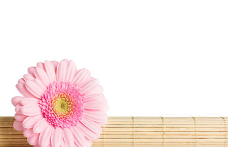 Gerbera on bamboo restraints  Isolated on the white background  photo