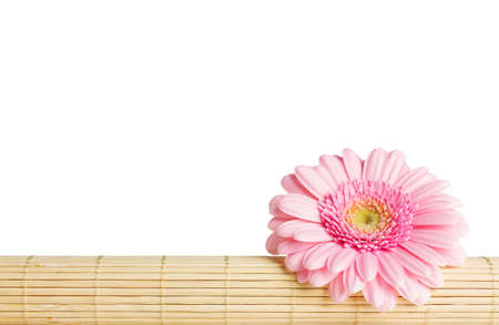 restraints: Gerbera on bamboo restraints  Isolated on the white background