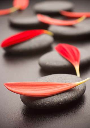 Spa stones and black background. Red gerbera petals. Stockfoto