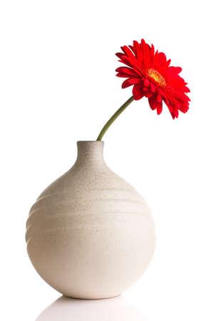 flower vase: Gerbera in vase isolated on the vhite background