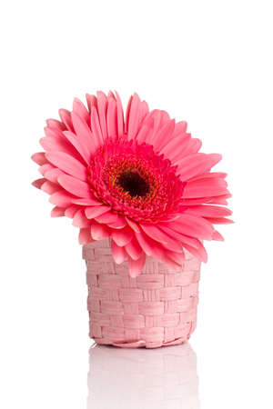 home accent: Gerbera in vase isolated on the vhite background