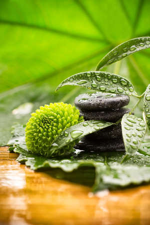 Spa stones on green leaves, flower, tropical spa harmony  photo