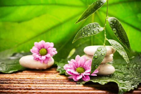 Spa stones on green leaves, flower, tropical spa harmony. photo