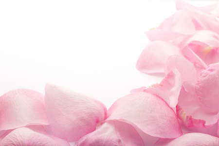 Rose petals isolated on the white background