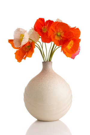 Poppies in a vase on a white background. photo