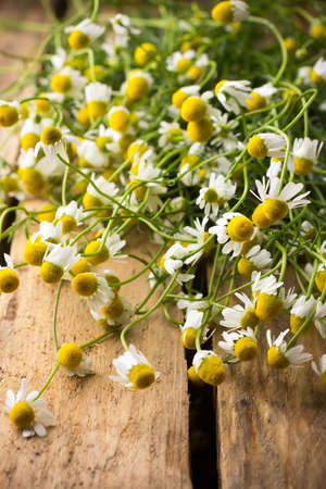 Chamomile flowers on a wooden surface  photo