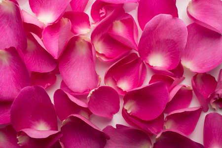 Rose petals. photo