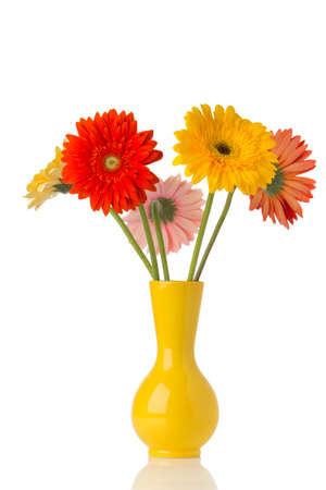 flower vase: Gerbera flower on the vase, isolated white background. Stock Photo