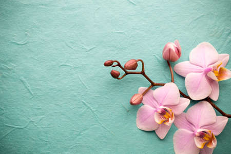 the wellbeing: Pink orchid on a wooden background.