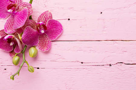 Pink orchid flowers on a wooden background. Orchid background.