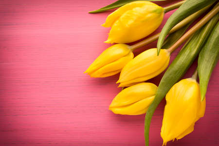bouquet flowers: Yellow tulips on a pink surface. Studio photography. Stock Photo