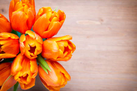 tulip: Tulips on a wooden surface. Studio photography.