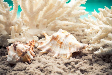 choral: Shell and coral on the sand of the sea beach.