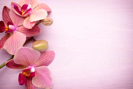 Pink orchid flower. Greeting background. Stock Photo