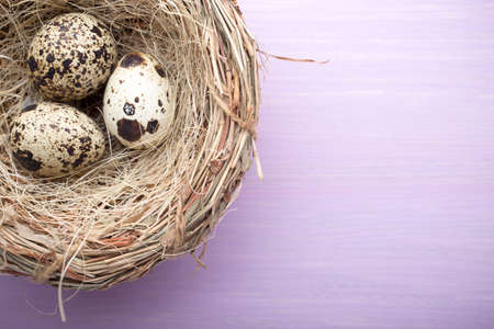 quail nest: Quail eggs in the nest on a wooden background.