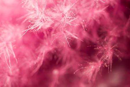 lint: Purple feather abstract . Macro shoot.