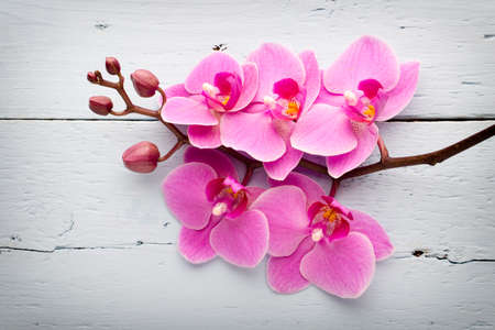 Pink orchid with buds. Greeting card.