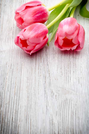 easter flowers: Pink tulips on the wooden background.