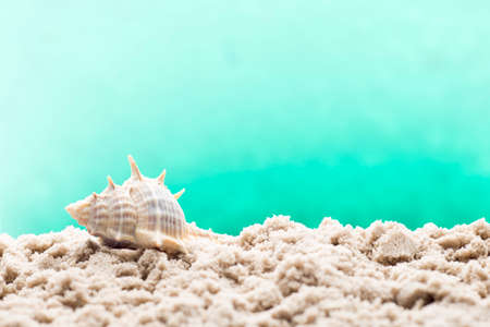 welcom: Underwater coral, shells and sand. Sea scene.