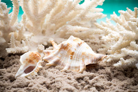 choral: Shell and coral on the sand, the sea beach.