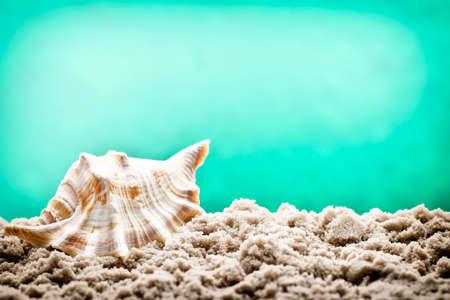 welcom: Underwater shell on  sand Stock Photo