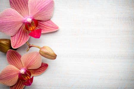 ピンクの蘭の花 写真素材