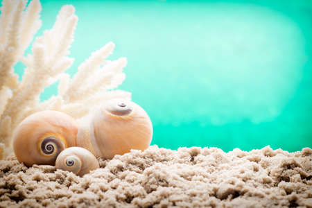 welcom: Underwater coral, shells and sand.