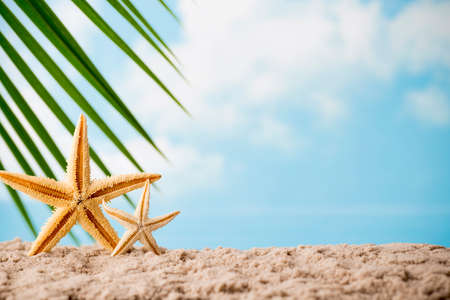 sea stars: Sea stars on the beach. Relaxation background.
